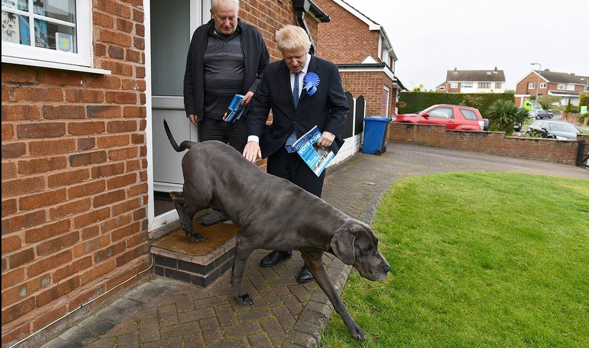 Dog really doesn't fancy listening to Boris Johnson on campaign trail