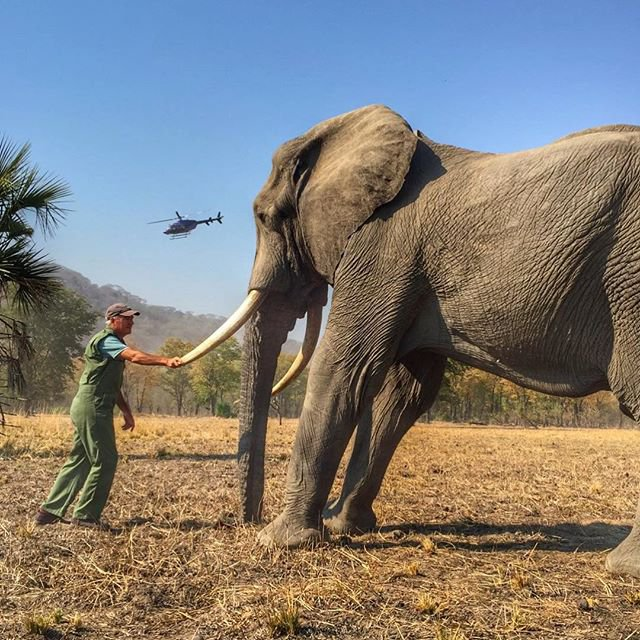 METRO GRAB - Prince Harry accused of cropping out elephant?s tethered leg in picture of Malawi visit to mark Earth Day From @sussexroyal/Instagram https://www.instagram.com/p/Bwj2roEBbwL/