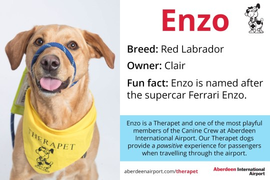 Enzo - Red Labrador Therapet dogs programme - the Canine Crew Who are the Canine Crew? Our team of four legged volunteers delight passengers with a friendly wag or furry cuddle. All of our therapy dogs are registered Therapets, part of Canine Concern Scotland Trust. Known to reduce anxiety, therapy dogs can bring smiles and brighten your day. The Canine Crew and their accompanying handlers roam the terminal every week to help you feel welcomed and relaxed. The dogs in bandanas and handlers in blue vests are an excellent addition to the customer service team. Passengers love seeing warm, wet noses and wagging tails that help create a friendly, PAWSitive experience at ABZ! Meet our Canine Crew and see when they are on shift. See one of our Canine Crew in the terminal? Make sure you share your pictures on social media using the hashtag #caninecrewabz, and we'll share the best ones! Meet the Aberdeen Airport Canine Crew Our Therapet Dogs are here to make your airport experience more enjoyable