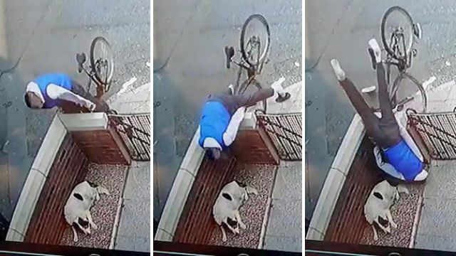 Series of pictures showing dog fail to wake up