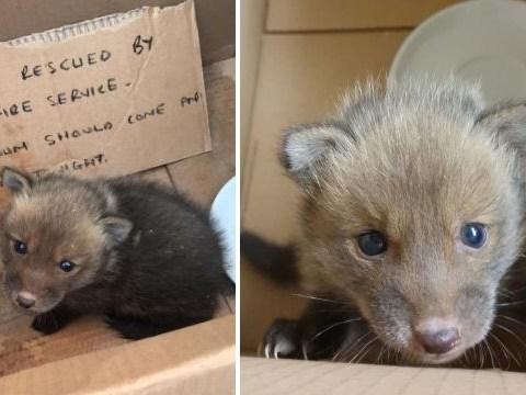Firefighters rescue baby fox stuck inside a wall then call it Ian