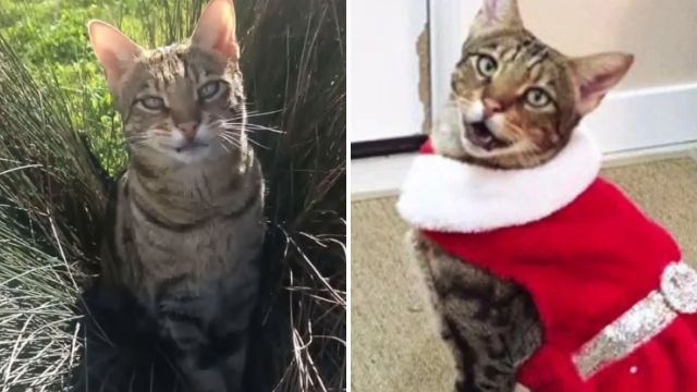 'America's baddest cat' gets in trouble with police 30 times