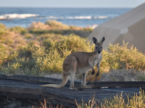 How to have an epic road trip in Western Australia