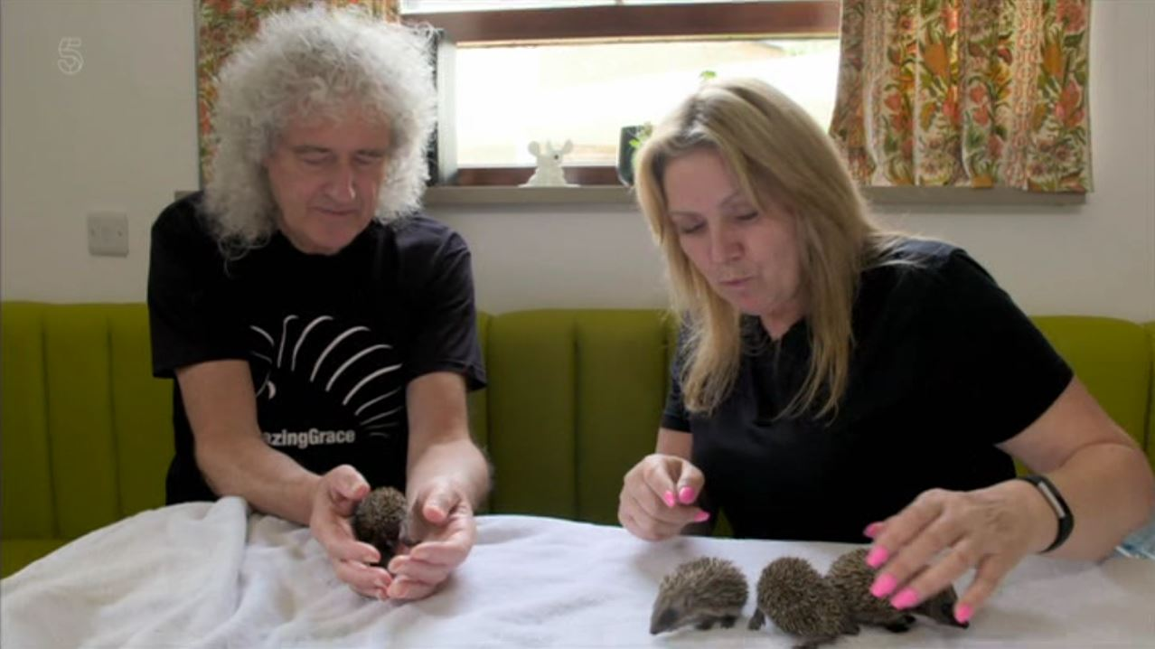 Brian May hailed 'hedgehog warrior'  (Picture: Channel 5)