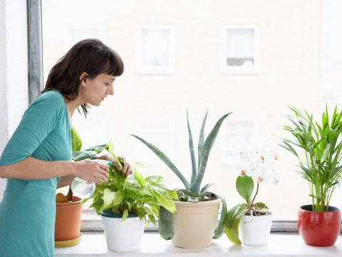 How to keep house plants alive in a dark flat