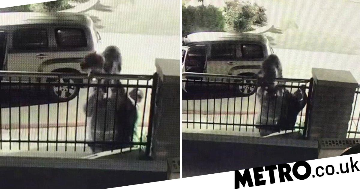 Owners shove dog off wall into animal shelter and abandon it