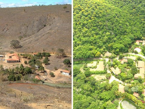 Couple create new rainforest by planting 2,000,000 trees over 20 years