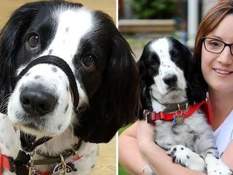 Clive the dog is a medical hero as he warns owner when to take medication