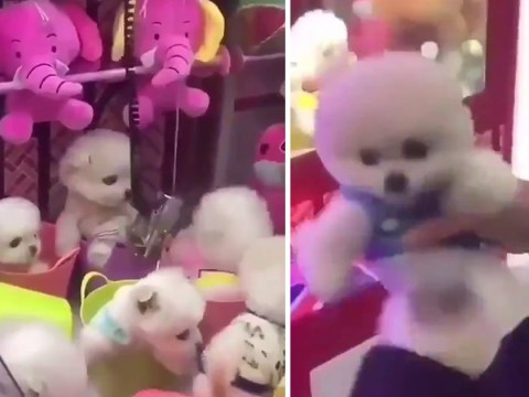 Live puppies grabbed from inside claw machine in 'disgusting' video