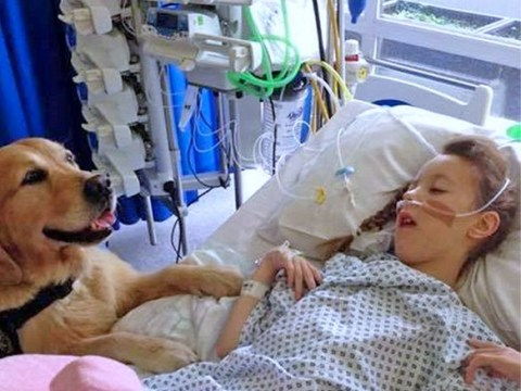 Therapy dogs 'overwhelmingly' help children in hospital beat anxiety