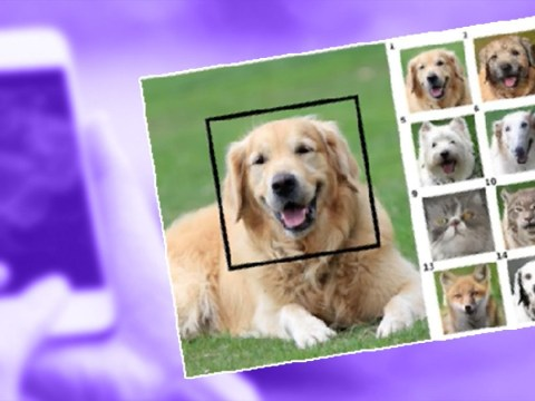 You can now use pet face swap to see what your dog would look like as a cat