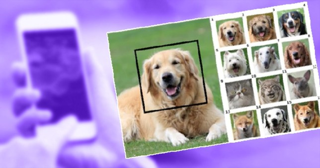Compilation of dog faces and someone holding a phone in the background to represent PetSwap, a new function that allows people to swap their pet's faces with other animals'