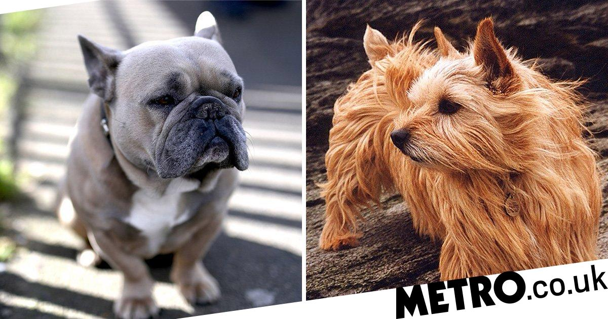 Researchers find breathing problems in dogs is linked to DNA mutation