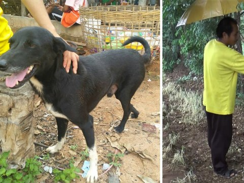 Dog rescues newborn baby buried alive by mum, 15, who wanted to hide pregnancy