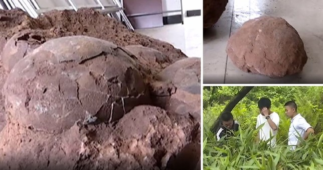 Students in China's Jiangxi Province found a cluster of rare fossilised dinosaur eggs.