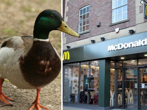 Two men end up in court after row about rescuing a duck in McDonald's