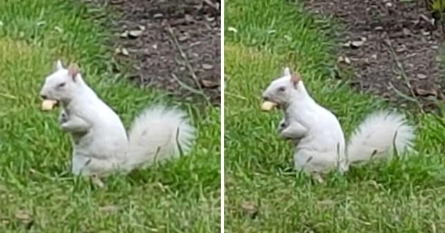 White albino squirrel spotted in London park