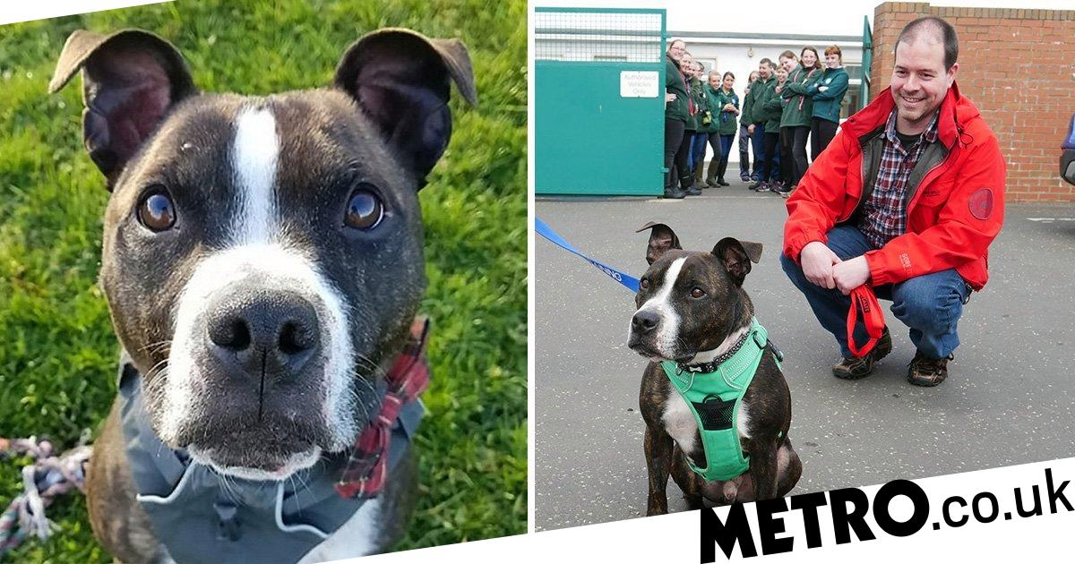 UK's 'unluckiest dog' finally finds a home after five years at a shelter