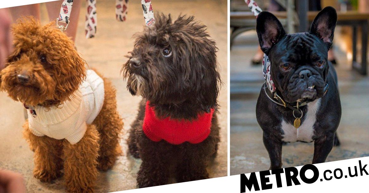 You can now go bowling with dogs at All Star Lanes