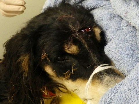 Terrified dog starved and beaten before being dumped on farm and left to die