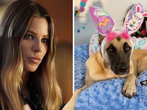 Lucifer fans demand Lauren German's dog Pepper gets a cameo for season 5 on Netflix