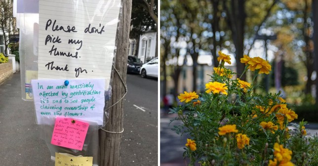 Residents on a street in London had a lot of opinions about the flowers (Picture: Rachel Thompson/ Twitter)