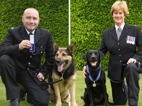 Police dogs awarded 'animal OBEs' for their work in London terror attacks