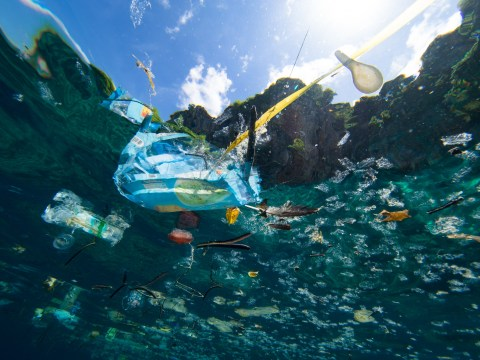 On World Oceans Day campaigners plead for us to help turn the tide on plastic pollution