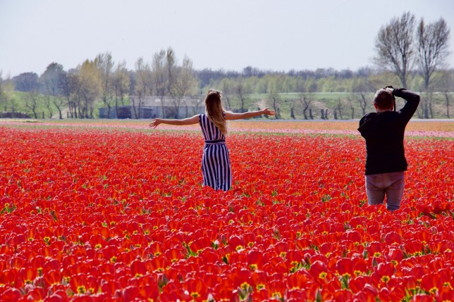 LISSE, NETHERLANDS - APRIL 18: People visit the Keukenhof, one of the world's largest flower and tulip garden in Lisse, Netherlands on April 18, 2019. This year's theme of the floral park is 'The Power of the Flower'. (Photo by Abdullah Asiran/Anadolu Agency/Getty Images)