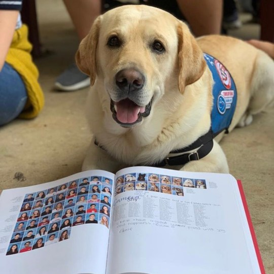 Parkland shooting survivors make therapy dogs a year book