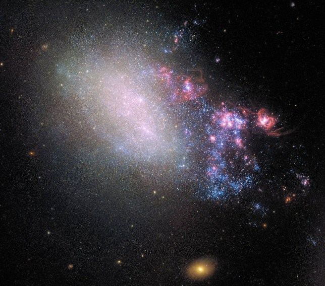 The irregular galaxy NGC 4485 shows all the signs of having been involved in a hit-and-run accident with a bypassing galaxy. Rather than destroying the galaxy, the chance encounter is spawning a new generation of stars, and presumably planets. The right side of the galaxy is ablaze with star formation, shown in the plethora of young blue stars and star-incubating pinkish nebulas. The left side, however, looks intact. It contains hints of the galaxy???s previous spiral structure, which, at one time, was undergoing normal galactic evolution. The larger culprit galaxy, NGC 4490, is off the bottom of the frame. The two galaxies sideswiped each other millions of years ago and are now 24,000 light-years apart. The gravitational tug-of-war between them created rippling patches of higher-density gas and dust within both galaxies. This activity triggered a flurry of star formation. This galaxy is a nearby example of the kind of cosmic bumper-car activity that was more common billions of years ago when the universe was smaller and galaxies were closer together. NGC 4485 lies 25 million light-years away in the northern constellation Canes Venatici (the Hunting Dogs). This new image, captured by Hubble???s Wide Field Camera 3 (WFC3), provides further insight into the complexities of galaxy evolution.