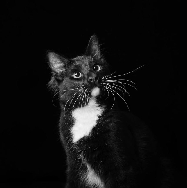 Merlin An enthusiastic advocate for the legalization of The Nip. Might have had some before the shoot.