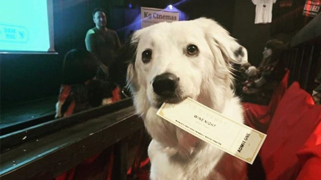 K9 cinema in Plano, a movie theatre that allows dogs