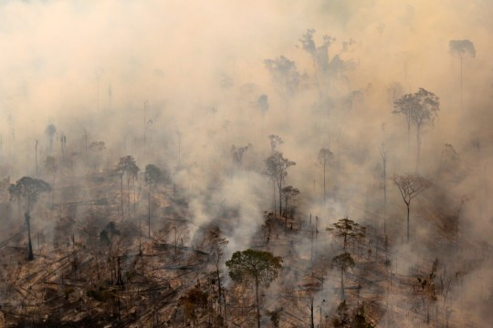 "Burning forest is seen during ""Operation Green Wave"" conducted by agents of the Brazilian Institute for the Environment and Renewable Natural Resources, or Ibama, to combat illegal logging in Apui, in the southern region of the state of Amazonas, Brazil, August 4, 2017"