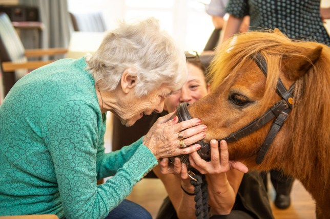 Resident Mary Cole meets Buttercup the pony from Furry Friends as she is taken around Magdalen Park care home to meet the residents, near Hull, East Yorks