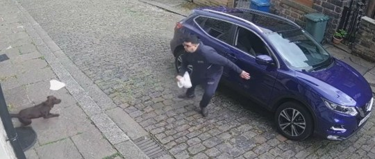 """HILARIOUS video shows a delivery man drop a takeaway and run for his life from a very excitable dog. The man's trousers slip halfway down his backside as he tries to escape Bruno, ignoring the owner's promise that """"he won't bite"""". The delivery man disappears from view and only returns to complete the delivery and collect his car once the Spaniel-like pooch is under control. The clip is believed to have been filmed in Rossendale, Lancashire on Sunday and was posted to Jordan Young's social media pages with the caption: ?Little dog chases the delivery driver.?"""