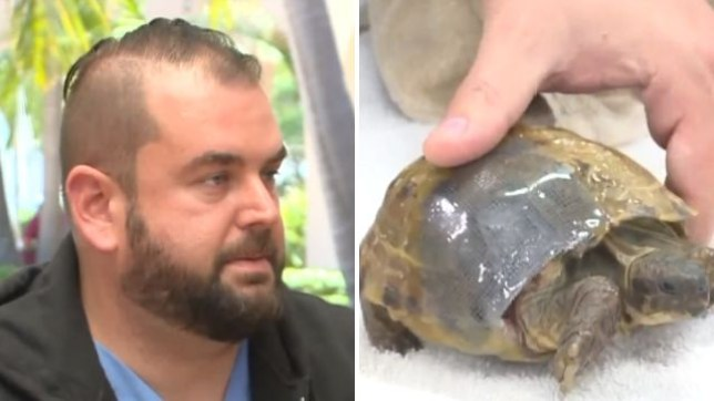 Dr Daniel Barbour repaired a tortoise's broken shell using a screen door kit, and says the innovative fix should keep the reptile safe from predators