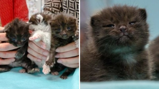 Kittens stowed away truck that drove them 500 miles before they were found