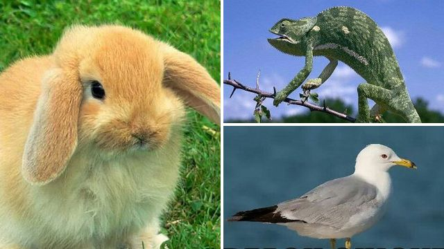 Internet gives animals humorous new names