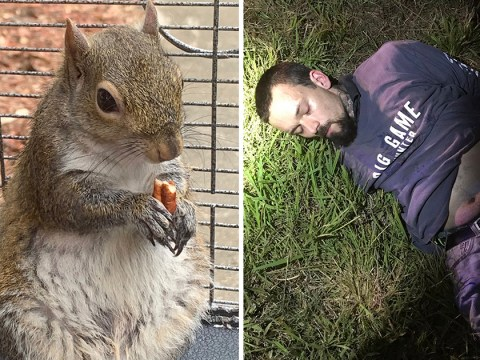 Man who got squirrel called Deeznutz hooked on meth is arrested