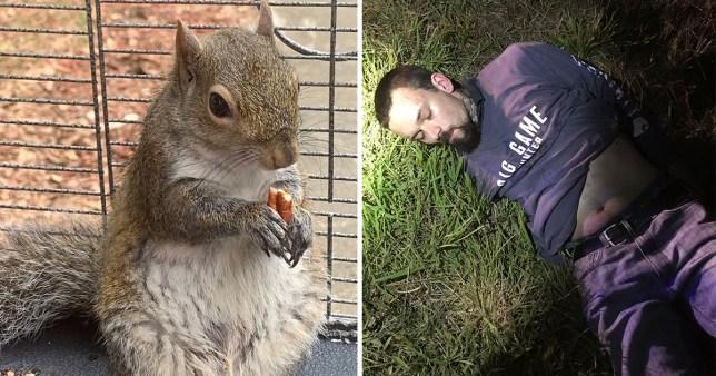 Deeznutz the meth-fuelled attack squirrel
