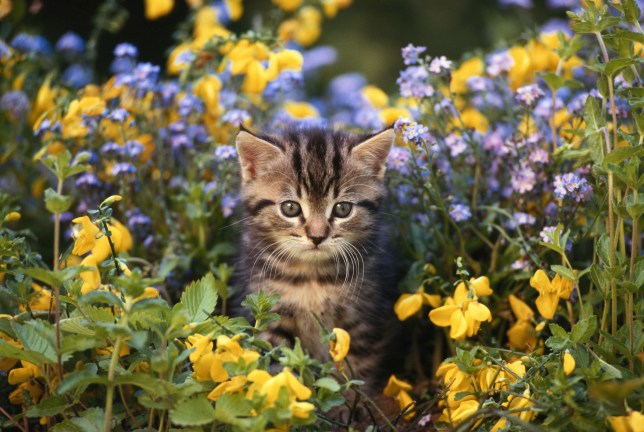 A kitten among some plants