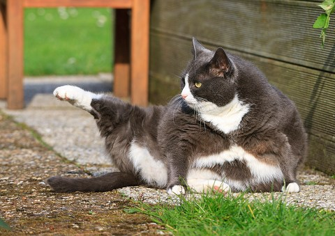 Five ways to get your cat into shape