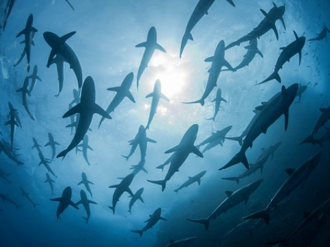 The only thing scarier than an ocean full of sharks is no sharks at all
