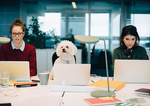 When is Bring Your Dog to Work Day and how to get involved?