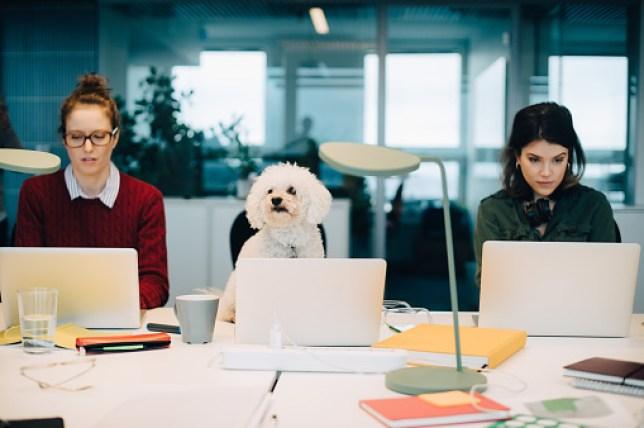 Dog using a computer at work