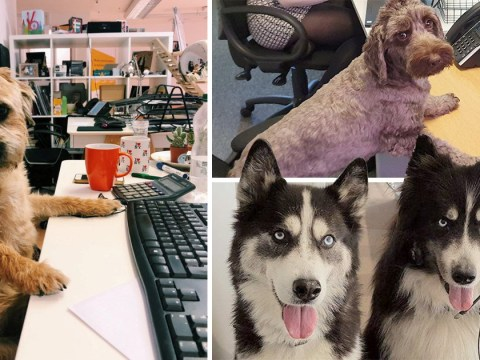 Bring Your Dog To Work Day sees good boys and girls take over the office