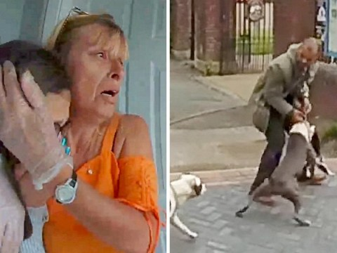 Heartbroken family filmed screaming as two Staffies maul pet cat to death on drive