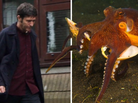Driver who said he crashed trying to avoid octopus is told 'get help'