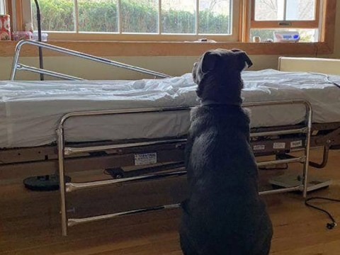 Heartbroken dog waits by owner's hospital bed after he died
